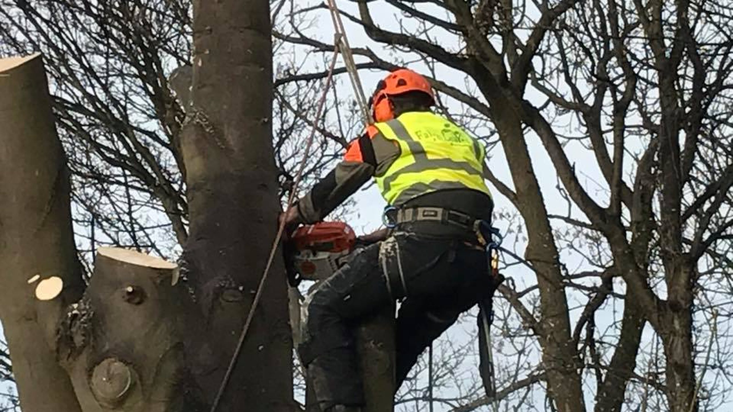 Tree Surgeons Wirral